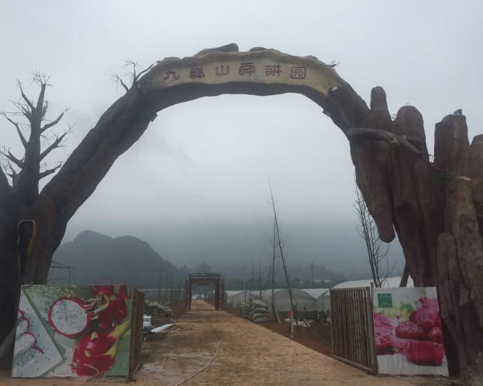 湖南永州 · 新四季火龙果园